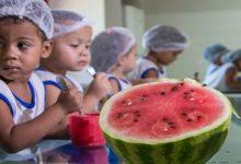Photo of CREN arrecada alimentos e outros itens para 24 comunidades carentes de Maceió