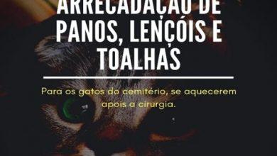 Photo of Campanha de arrecadação para ajudar gatos de cemitério é lançada