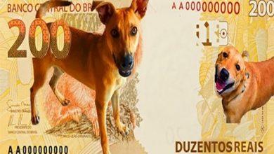 Photo of Nota de R$ 200: BC estuda moeda especial com vira-lata caramelo