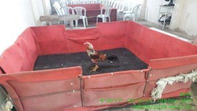 Photo of Após denúncia, polícia encontra rinhas de galo funcionando dentro de chácara no interior
