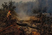 Photo of Em diligência no Pantanal, senadores dizem que cenário é devastador
