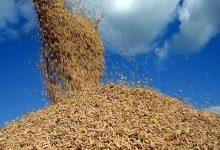 Photo of Em meio à alta do arroz, Alagoas registra retração de 15,3% na produção do grão