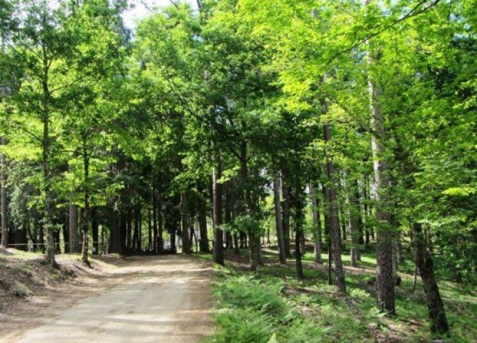 floresta-lousa-696x396