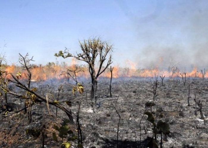 queimas amazonias